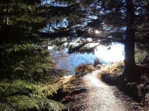 Natural Health Path